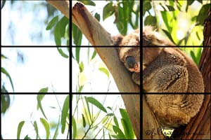 Image to describe photography rule of thirds