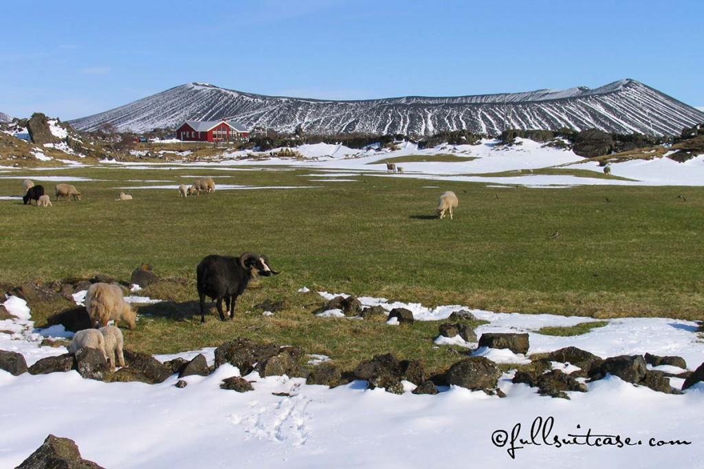 Volcanic landscape Myvatn area