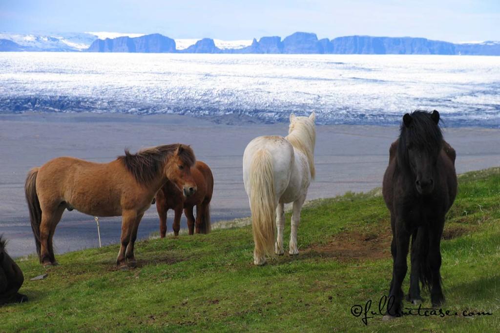 Icelandic Horses at a glacier