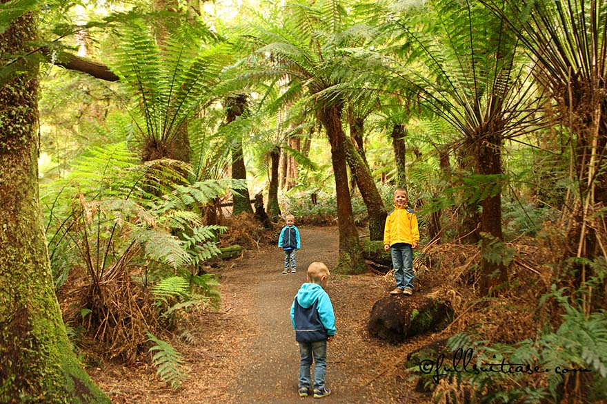 Children in Australian Rainforest - Maits Rest in Otway National Park