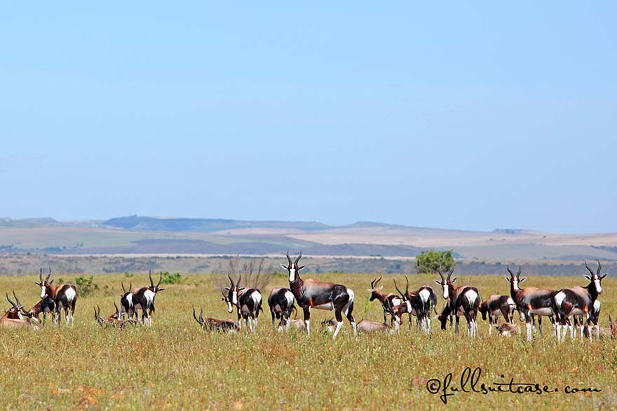 Bontebok National Park near Swellendam, South Africa