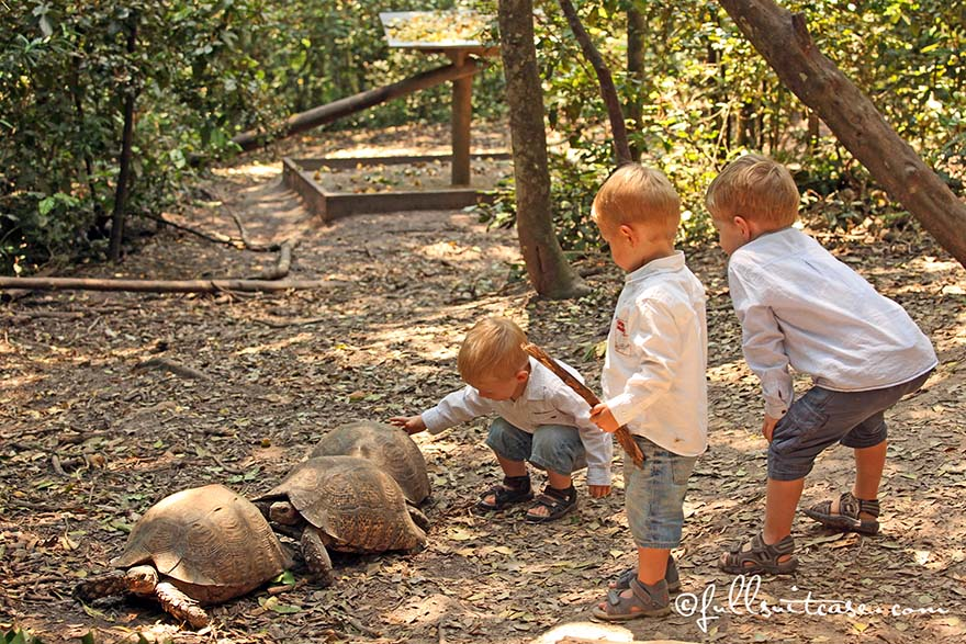 Little kids watching wild turtles in South Africa