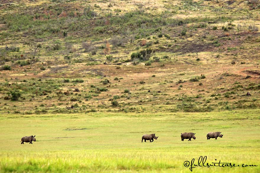 Family safari trip - rhinos at Plettenberg Bay Game Reserve