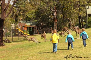 Kids chasing kangaroos running to the playground