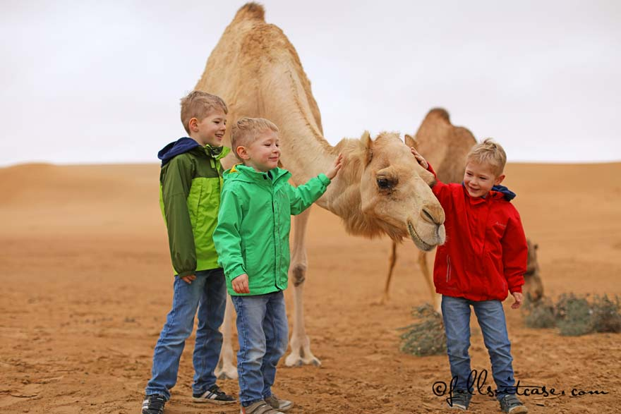 Children wearing warm clothing in Dubai desert with a camel