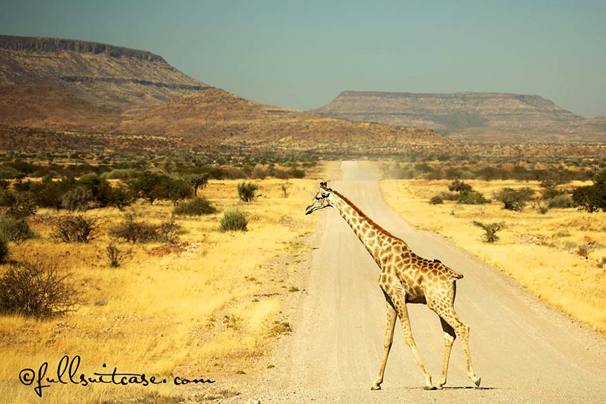 You will see plenty of wildlife in Namibia