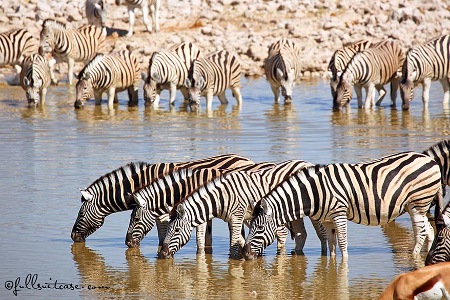 Okaukuejo is the best place to stay in Etosha National Park Namibia