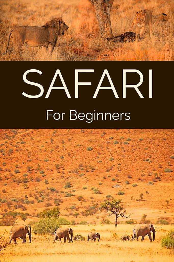 All you need to know before your first safari experience in Africa.