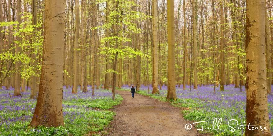 Reebokwandeling brings you to the nicest parts of Hallerbos forest