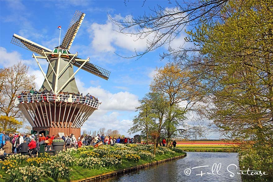 Traditional Dutch windmill overlooking the flower fields in Keukenhof