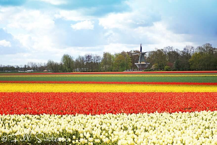 How to see Keukenhof gardens and tulip fields in the Netherlands