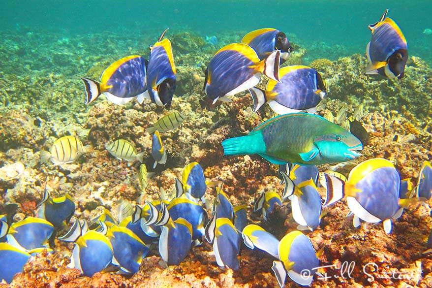 Snorkeling in Seychelles amongst colorful fish