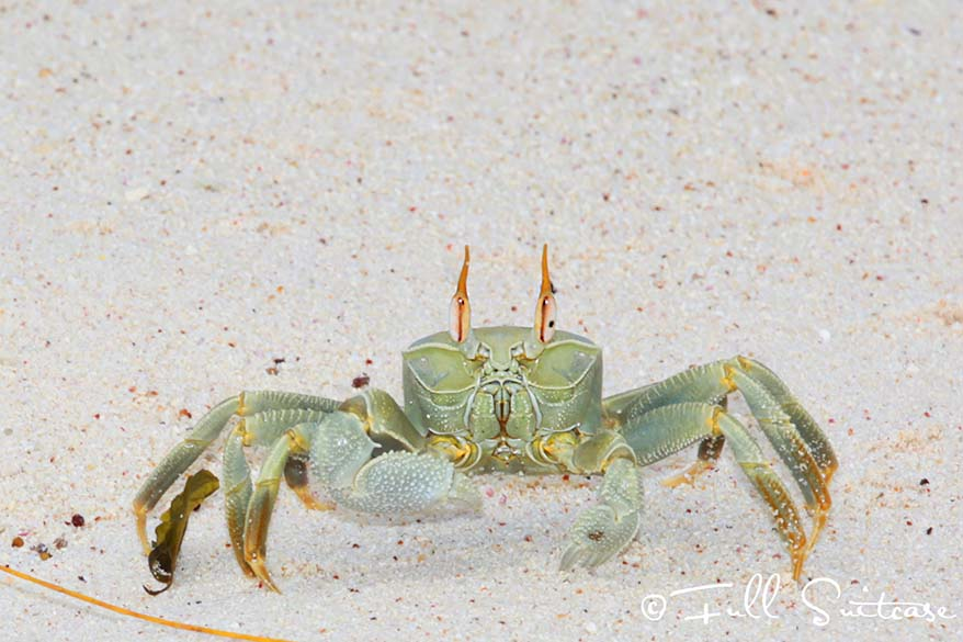 A crab on the beach in Seychelles