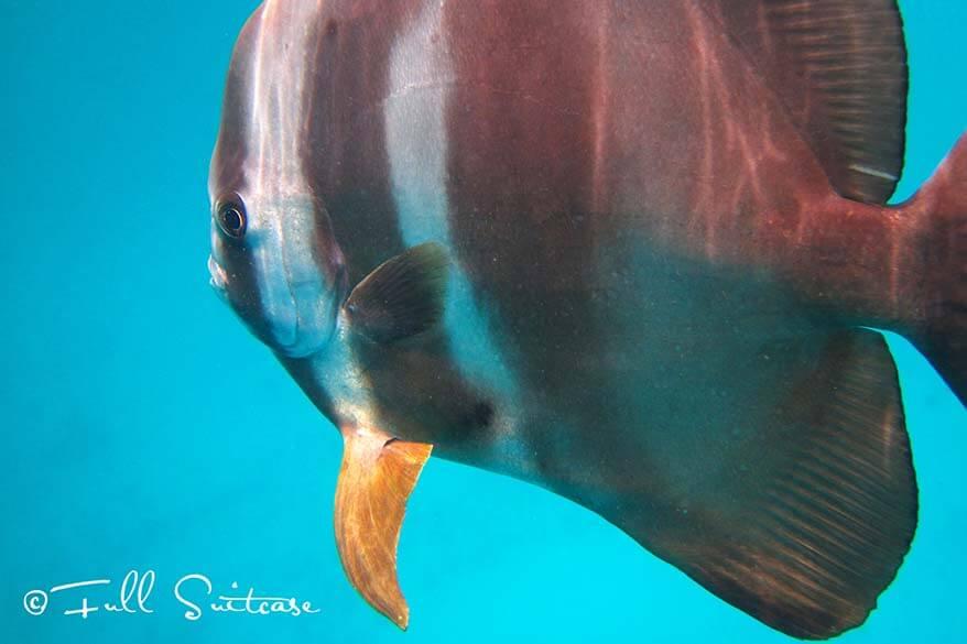 Snorkeling in the Seychelles