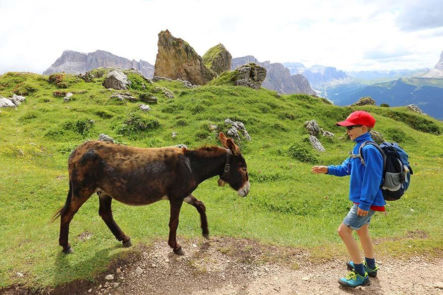 Hiking in the mountains with kids