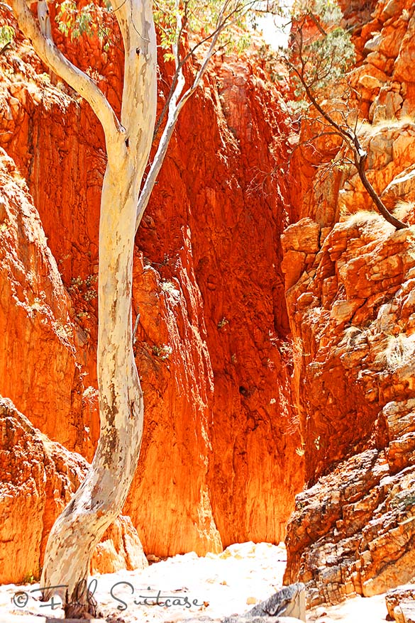 Standley Chasm West MacDonnell Ranges Australia