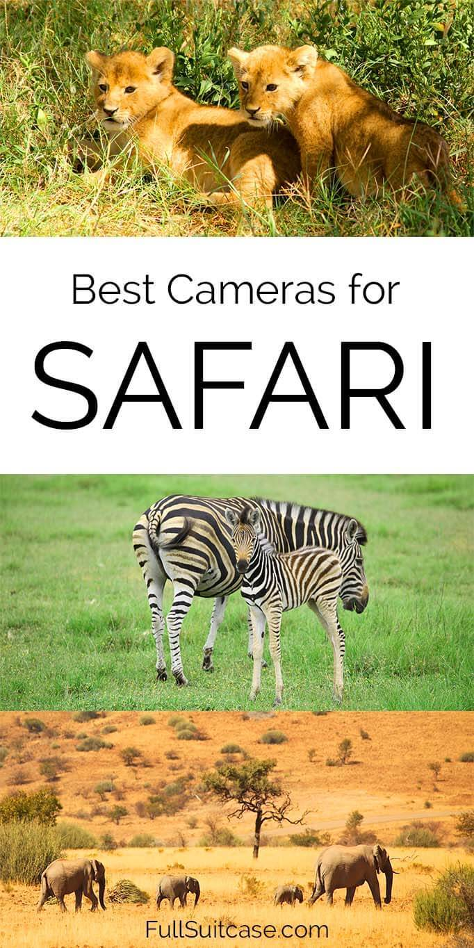 Best cameras for safari and lenses for wildlife photography