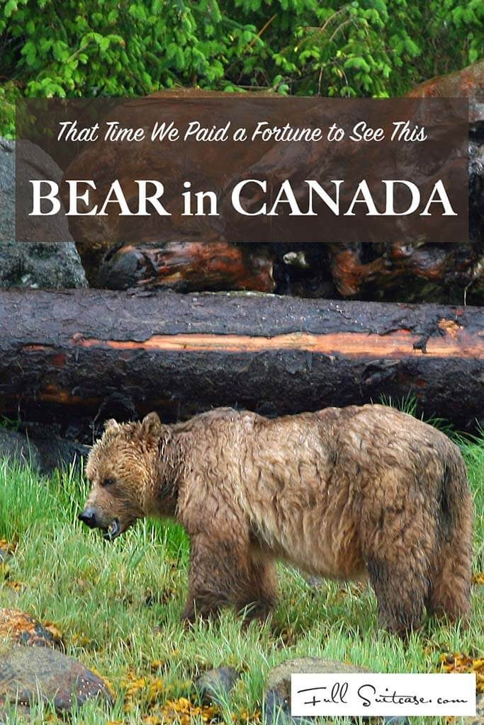 That time we paid a fortune to go on a bear tour in Canada and got to see this one wet grizzly
