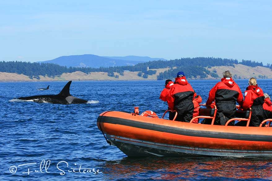 Whale watching Orkas in Canada