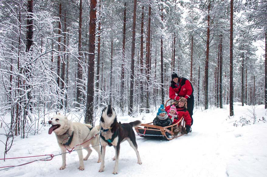 Husky Sledge in Finland