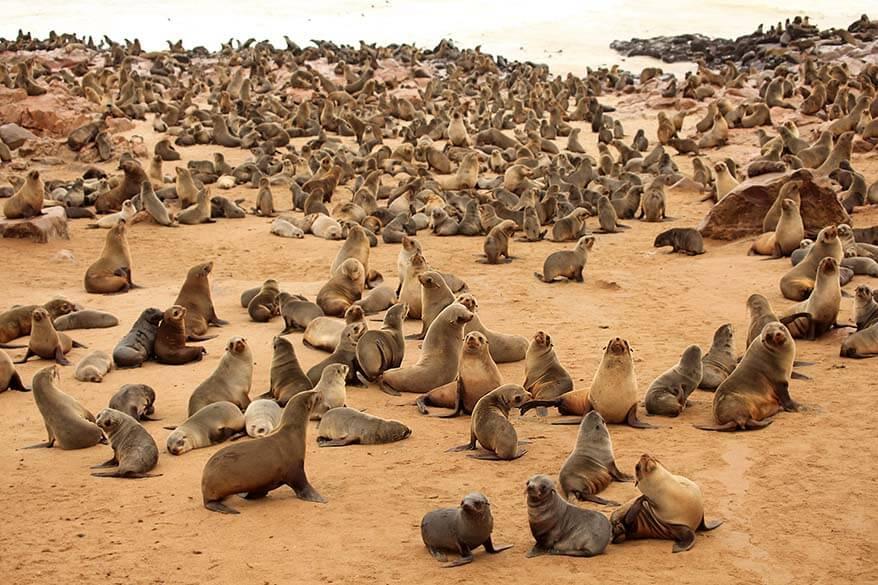 Cape Cross Seal Colony Namibia