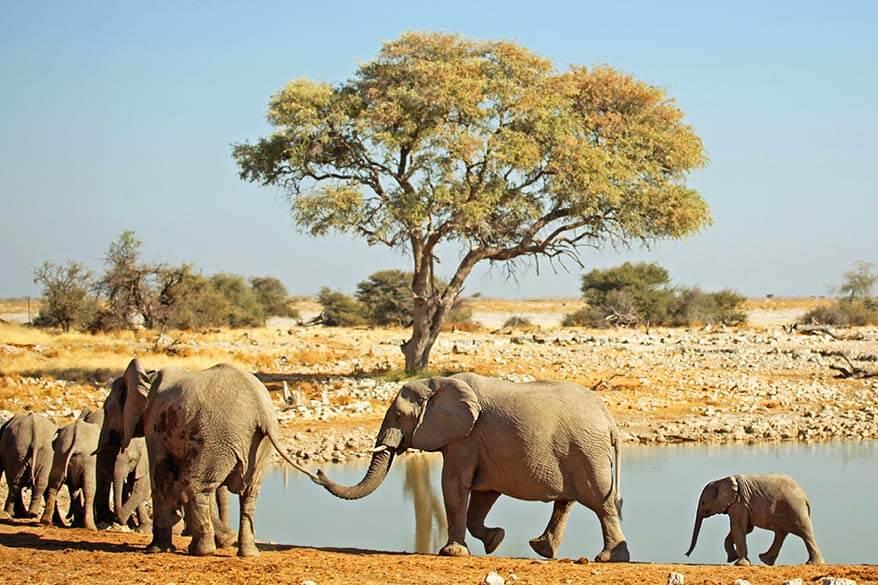 Okaukuejo waterhole in Etosha National Park Namibia