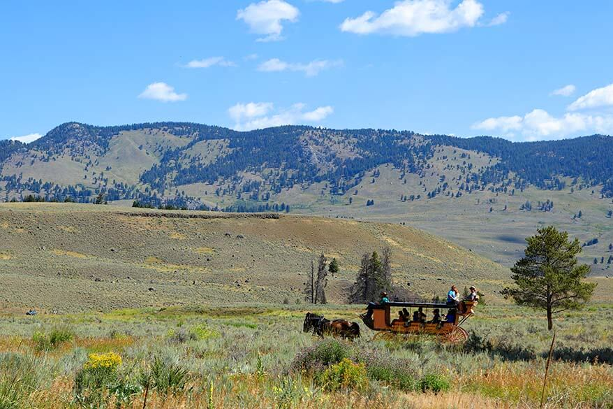 Horse and wagon carriage ride in Yellowstone National Park