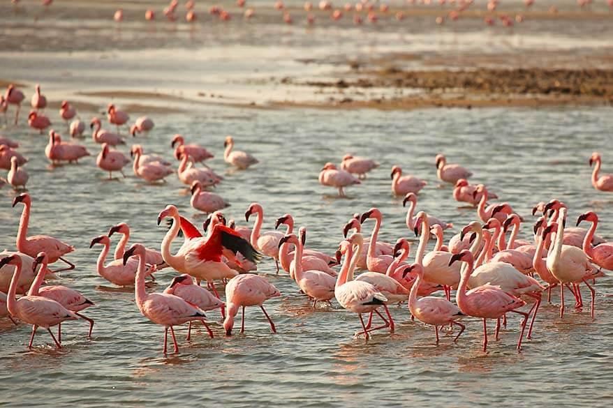Walvis Bay flamingos Namibia