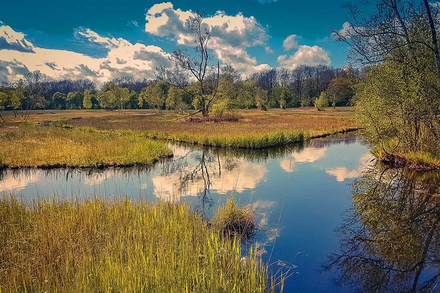 Best day trips from Amsterdam - Amsterdam Forest