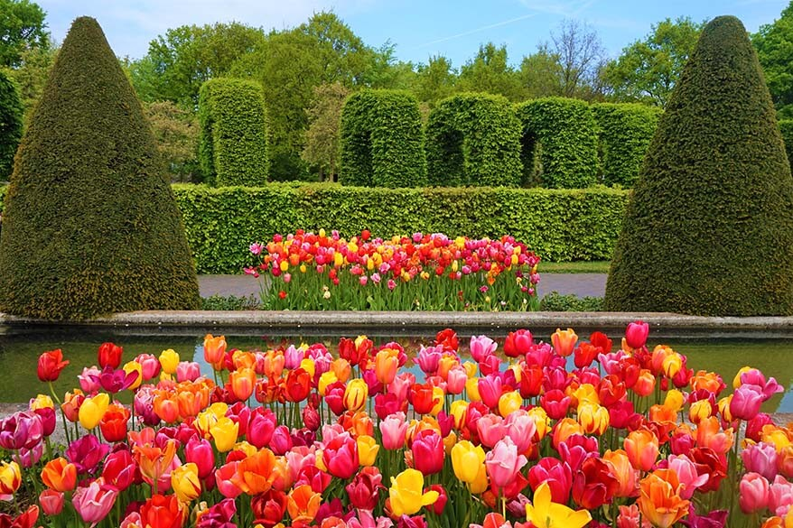 Keukenhof and the tulip fields is the most popular spring day trip from Amsterdam
