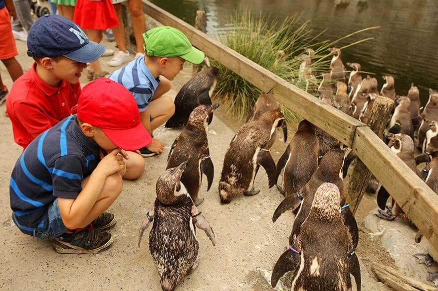 So many great reasons to (re) visit Planckendael animal park near Mechelen in Belgium