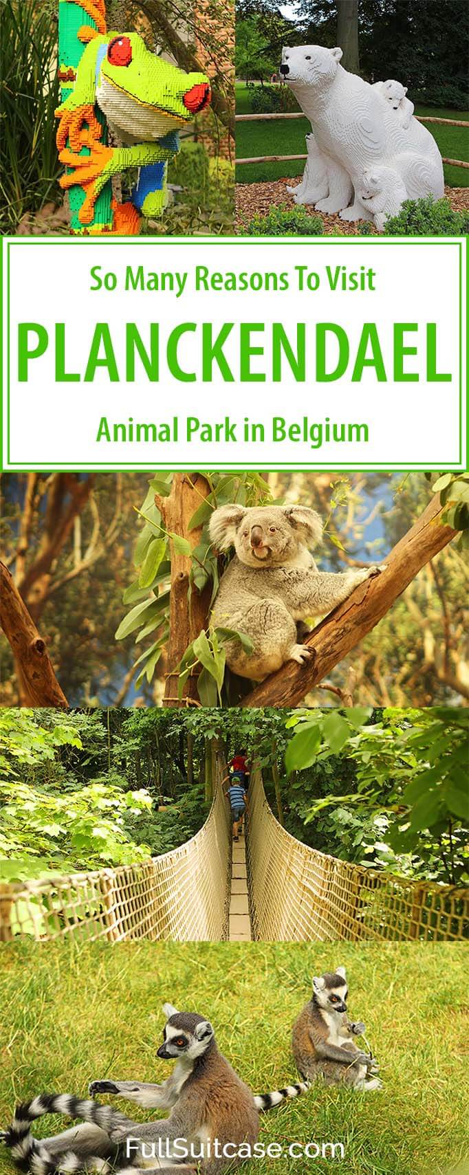 There are so many reasons to visit Planckendael animal park in Belgium. Find out!