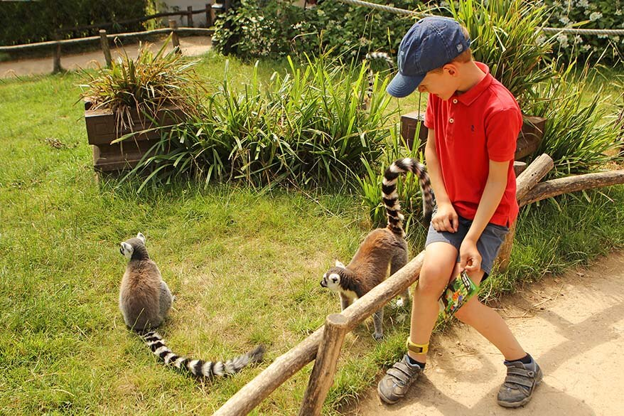Walking among monkeys in Planckendeal zoo is great fun for kids