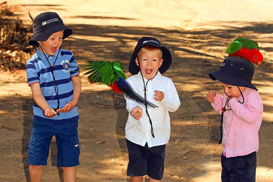 Kids feeding King Parrots at Kennet River, Great Ocean Road Australia