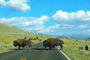 Yellowstone itinerary suggestions