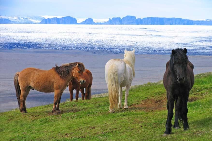Most popular and best rated tours and day trips in Iceland for any season