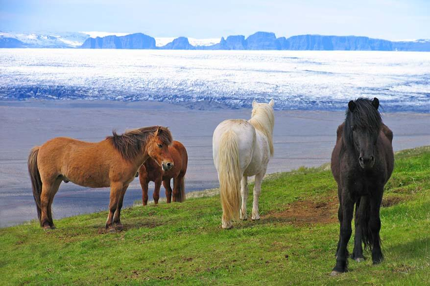 13 Best Iceland Tours, Excursions & Day Trips (All Seasons)