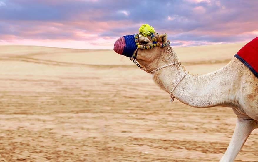 Best Dubai tours and excursions you shouldn't miss
