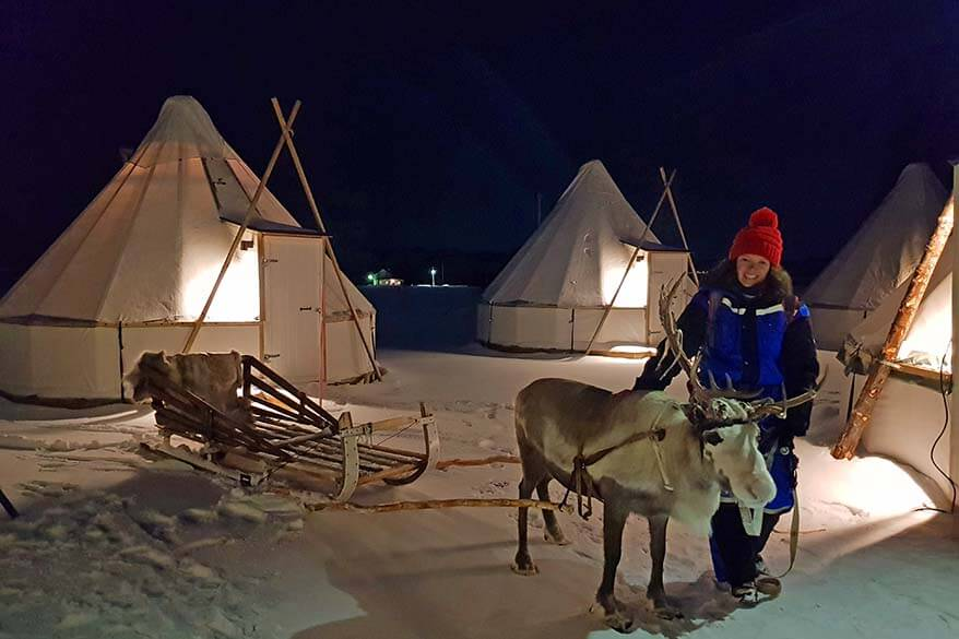 Reindeer sledding evening tour near Tromso