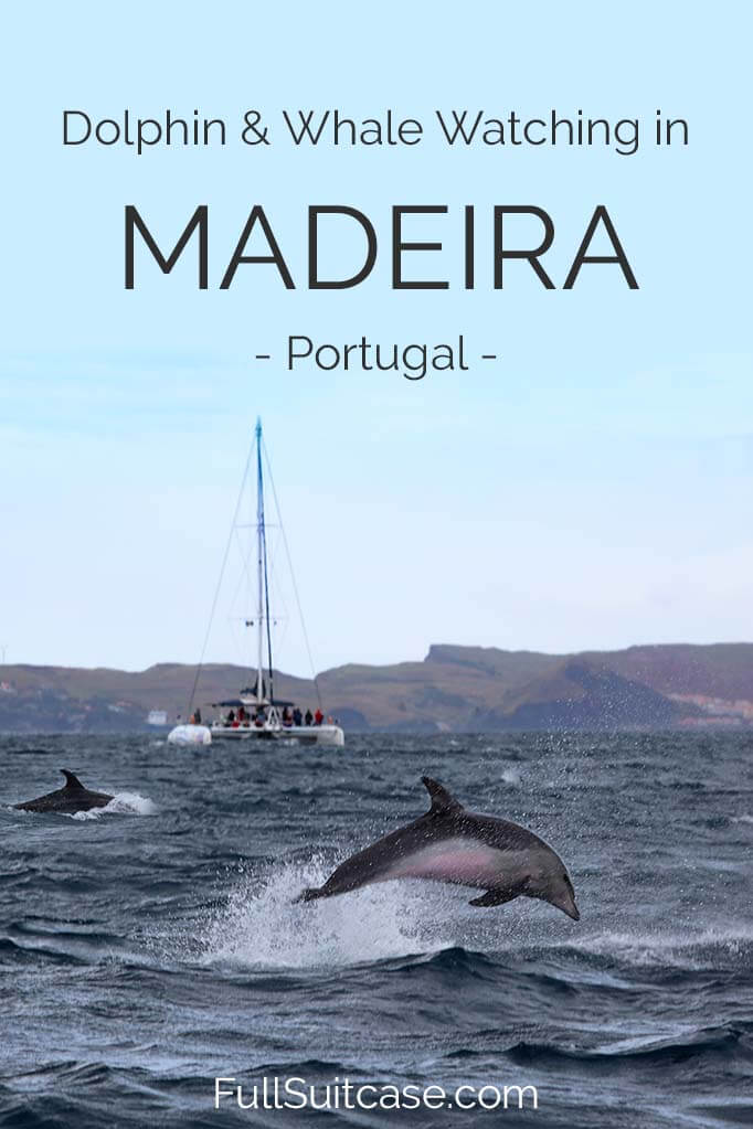 Complete guide to dolphin and whale watching tour in Madeira