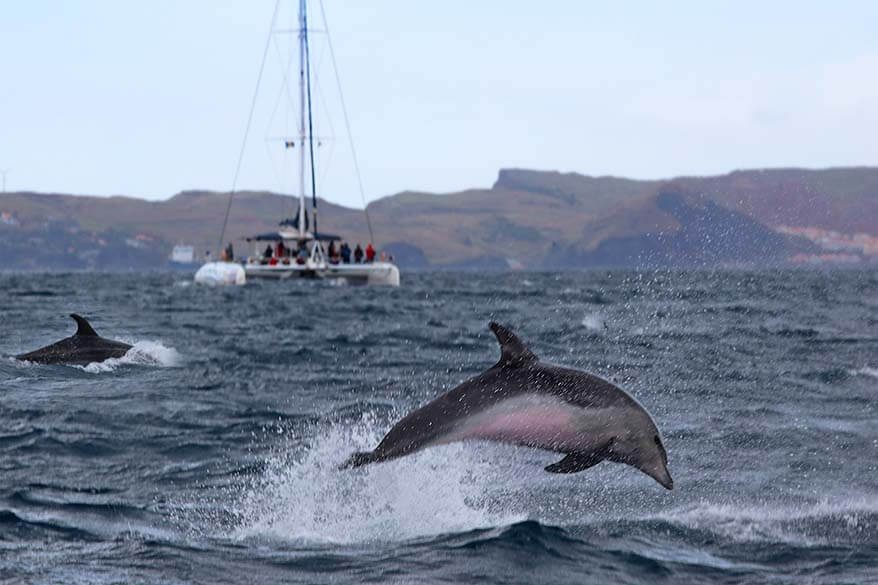 All you may want to know about dolphin and whale watching in Madeira