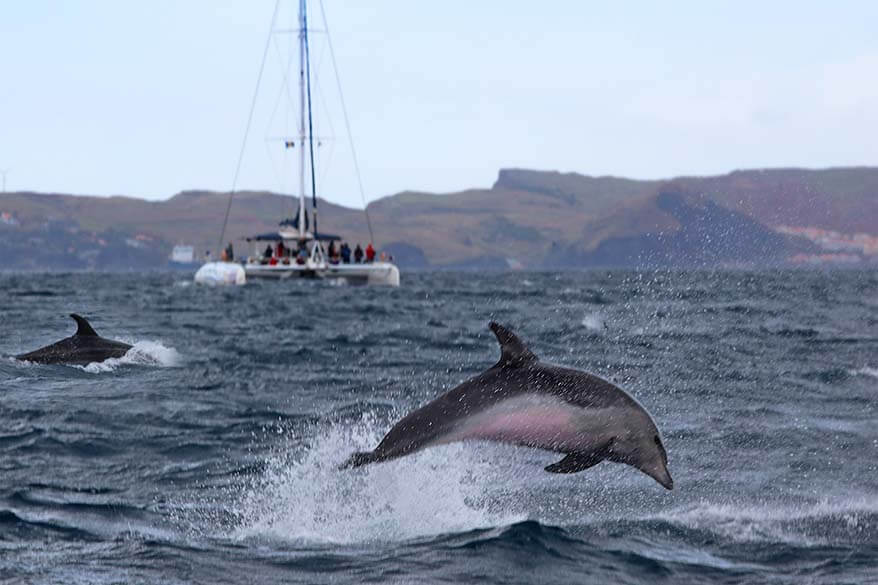 Dolphin and Whale Watching in Madeira: Info & Tips