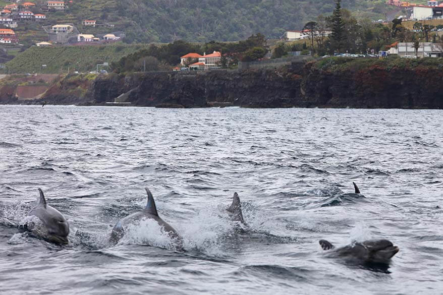 You can see dolphins really close to the coast in Madeira