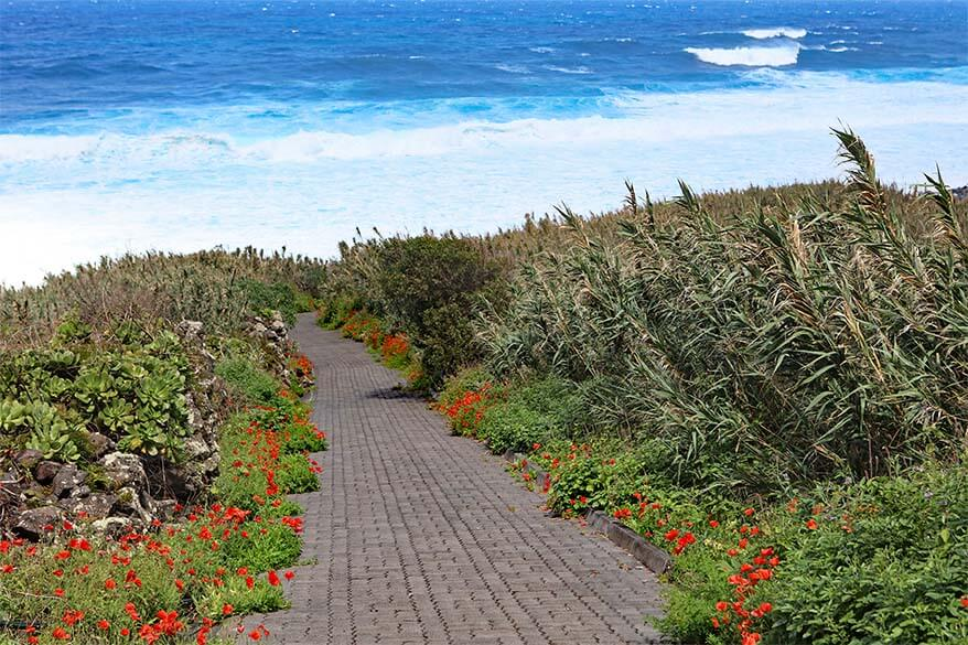 Wildflowers on Madeira coast in spring