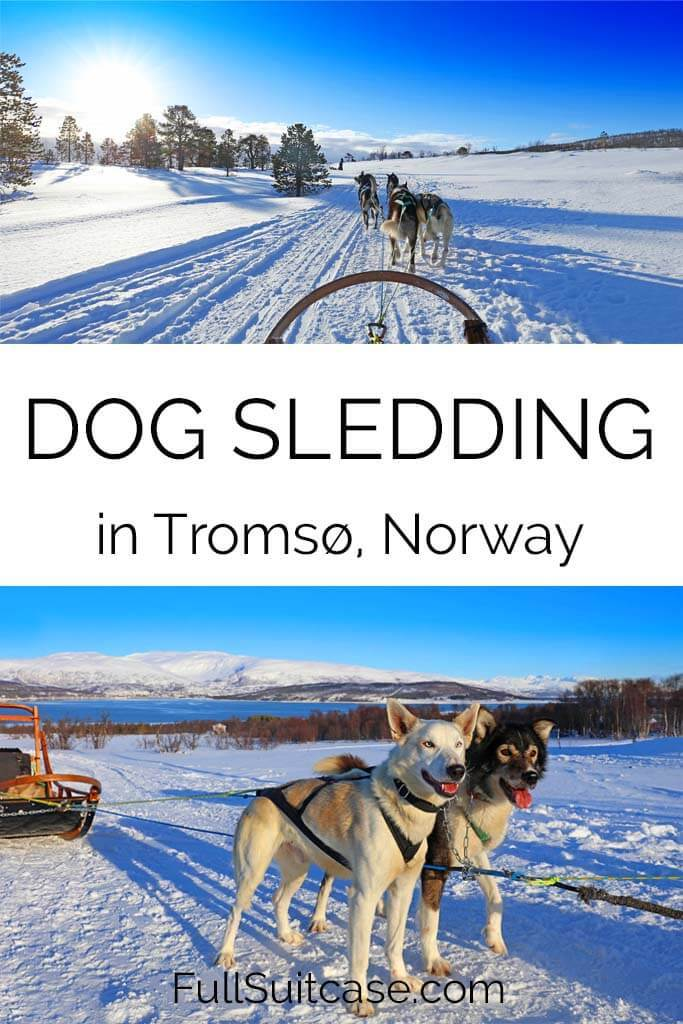 Complete guide to dog sledding in Tromso Norway