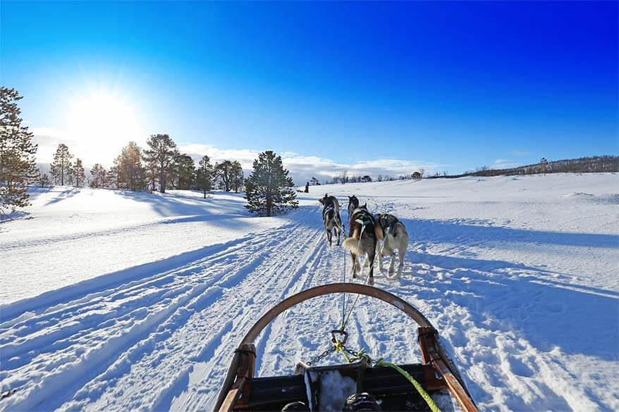 Dog sledding in Tromso Norway - our experience and practical tips
