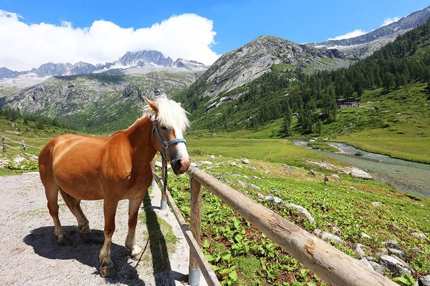 Horse riding near Rifugio Val di Fumo in Trentino Italy