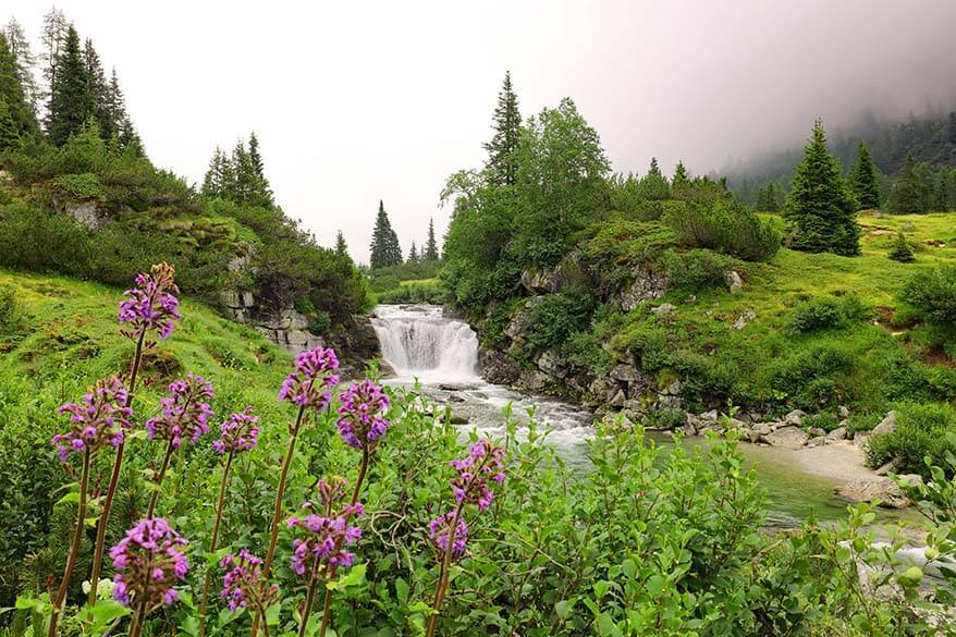 Waterfall and wildflowers along Val di Fumo hike in Italy