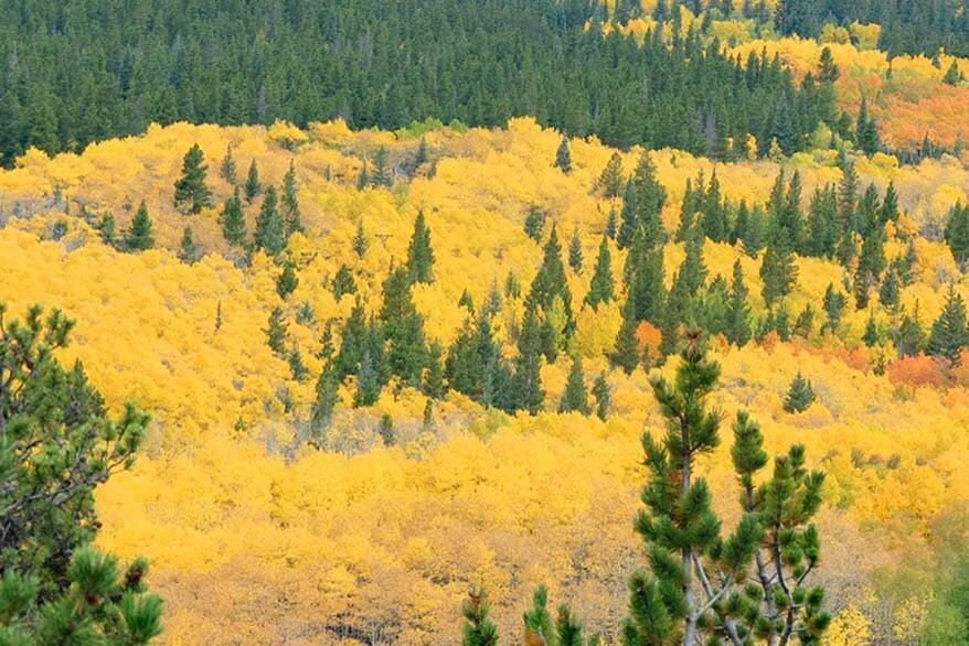 Beautiful fall colours in the Rocky Mountain National Park Colorado