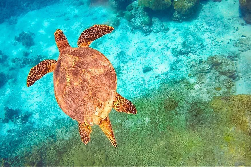 Swimming with turtles in the Similan Islands - unforgettable day trip from Phuket